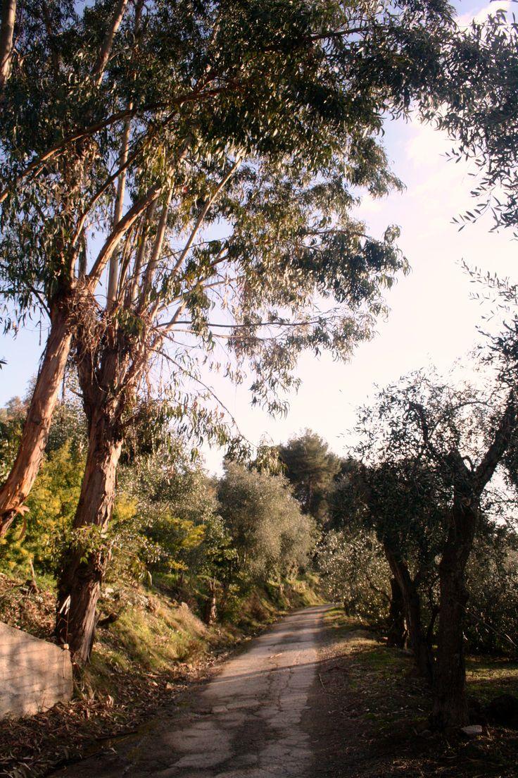 Country-road, Soldano.