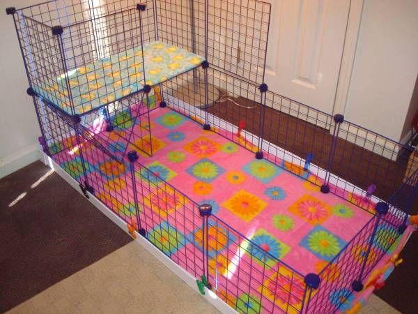 47 best guinea pig cages images on pinterest pig stuff for Diy guinea pig cage designs