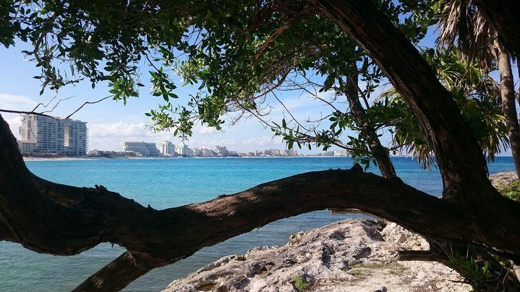 Cancun_tree | by arceo.daniela