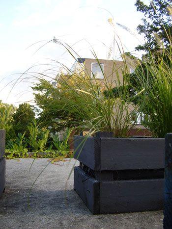 Michel's blog - Het oog wil ook wat... We willen de tuin er graag goed uit hebben zien, dus liggen de courgette planten inmiddels in de groene bak en wuiven er siergrassen op het dak. #siergras #Pennisetum #Lampenpoetser Bekijk meer tips op www.tuinen.nl