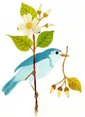 Gennine bluebird