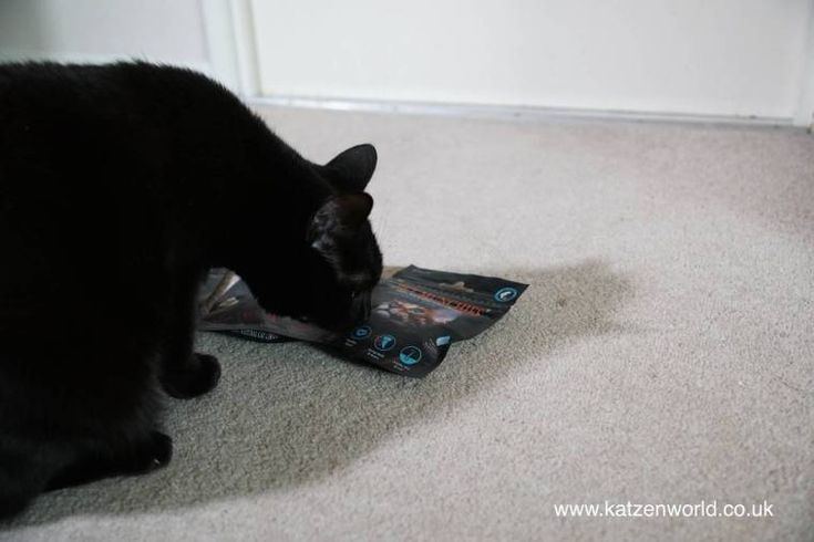 Oliver & Nubia: Yummy Food Delivery to Oli's Bedroom check this amazing photo from Katzenworld