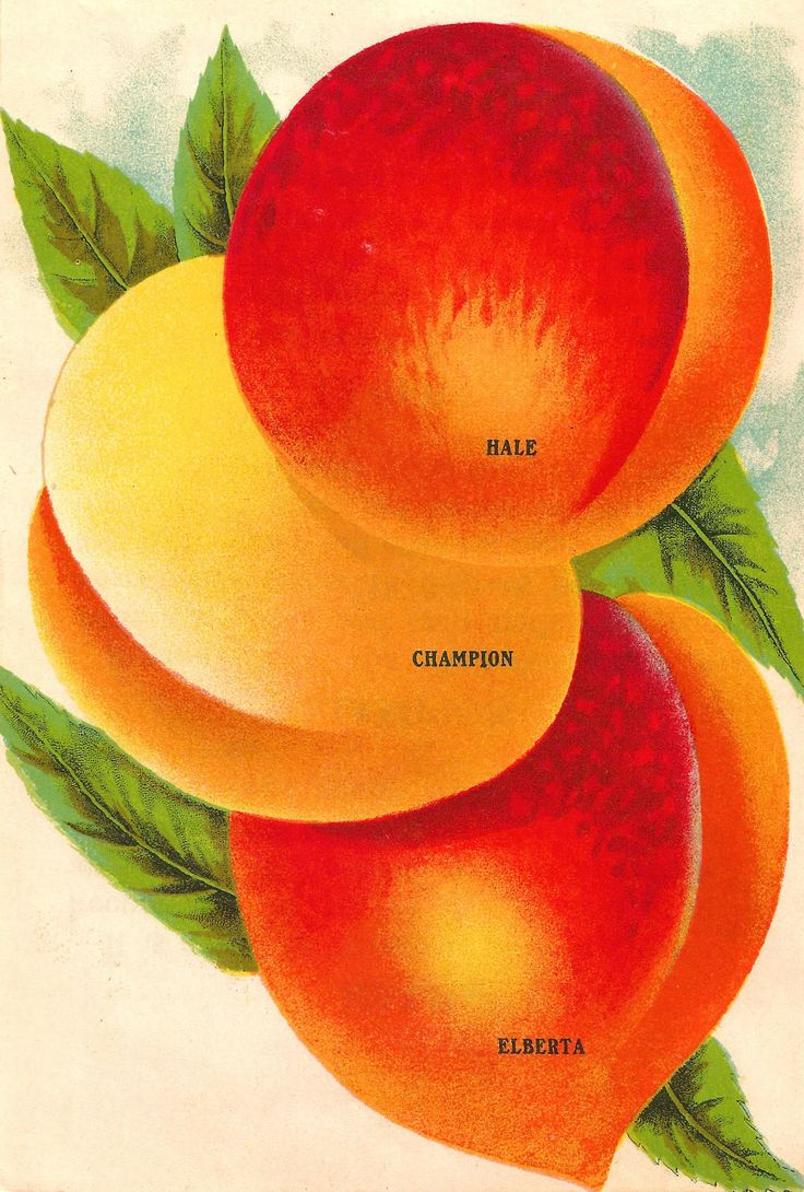 17 best images about peaches on pinterest for Peach tree designs