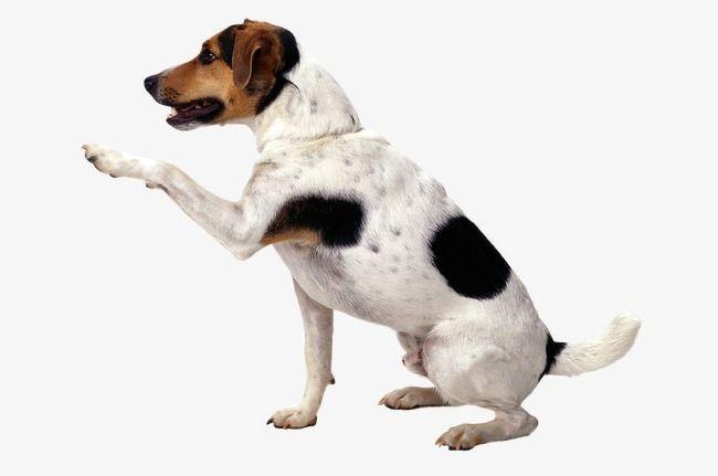 Dogs Dog Background Dog Shaking Dogs