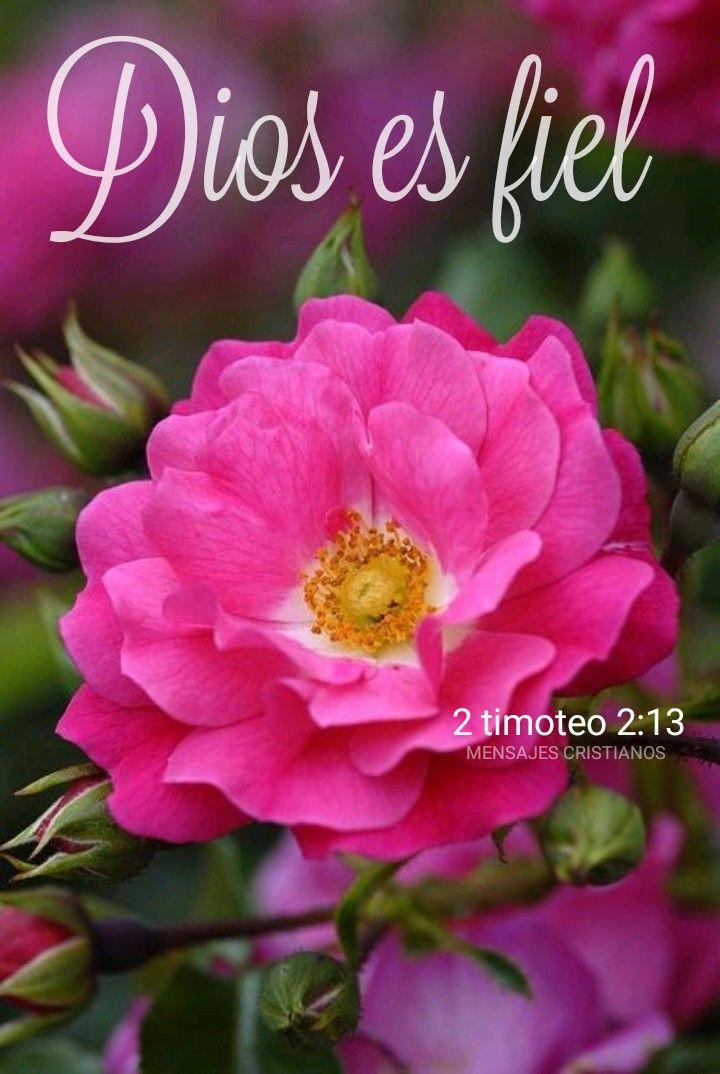 Dios Es Fiel 2 Timoteo 2 13 Bendiciones Diostebendiga Hoy Jesussalva Jesussana Jesusespaz Jesuses Flores Bonitas Lugares Com Flores Flor De Jardinagem
