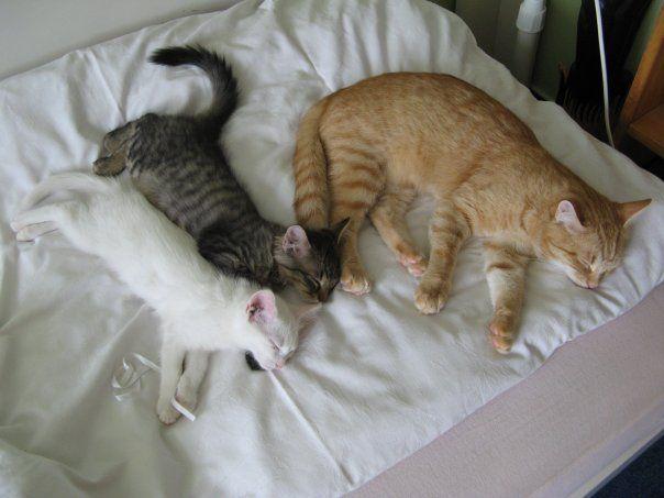Emma, Toby, Kiki 2009