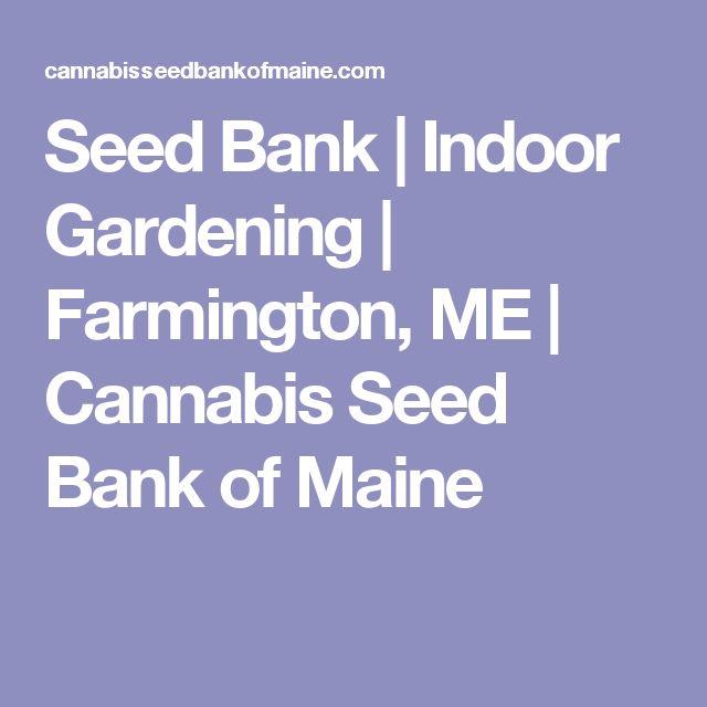 Seed Bank | Indoor Gardening | Farmington, ME | Cannabis Seed Bank of Maine