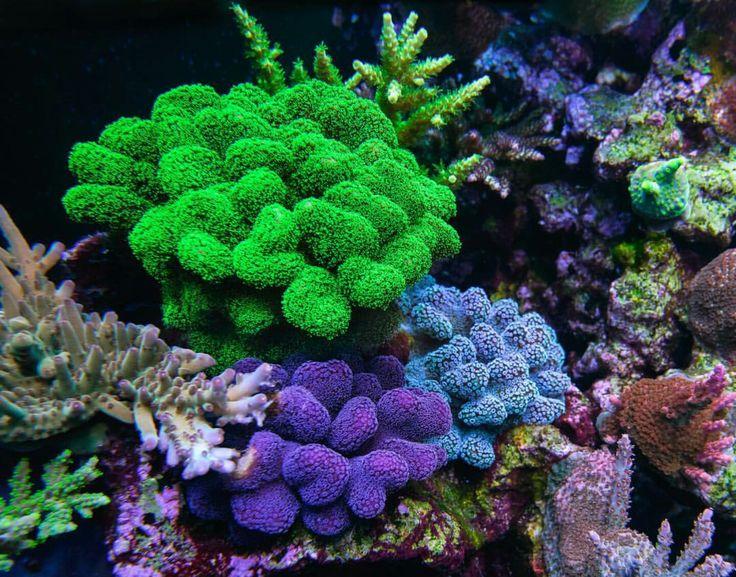 1000 Images About Aquarium Ideas On Pinterest Reef