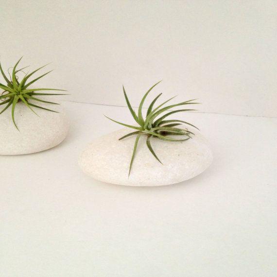 Pure white egg shaped rock air plant-. Zen decor desk decor-modern minimalist decor -spa on Etsy, $8.00