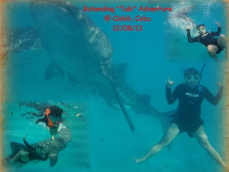 whale shark encounter at OSLOB, CEBU