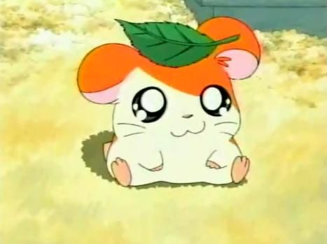 AGGHH IM GUNNA DIE I ALMOST FORGOT ABOUT HAMTAROOO THIS WAS LIKE MY SHIT WHEN I WAS ALITTLE BABY OTAKU XD
