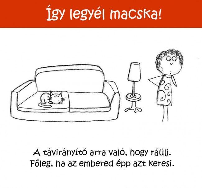 2315 Így legyél macska!   Tippek és ötletek kezdő cicusoknak