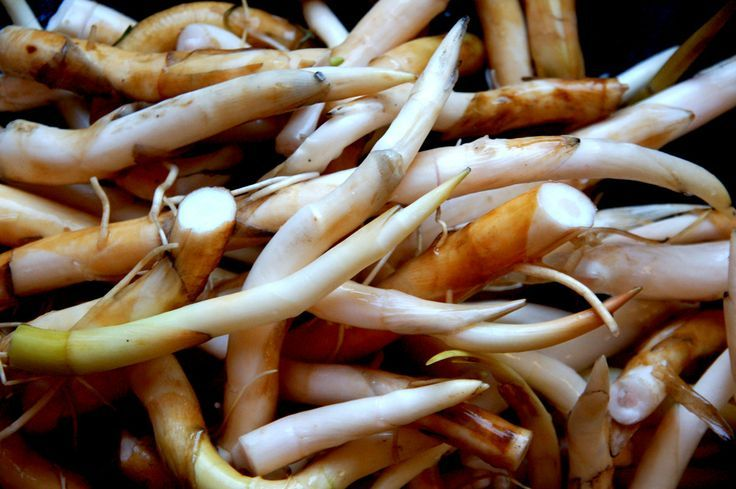 Cattail roots and young shoots. Raw, pickled and cooked like potatoes