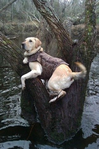 "Pinner: ""Definitely makes me miss our Duke dog, couldn't have asked for a better hunting partner!"""