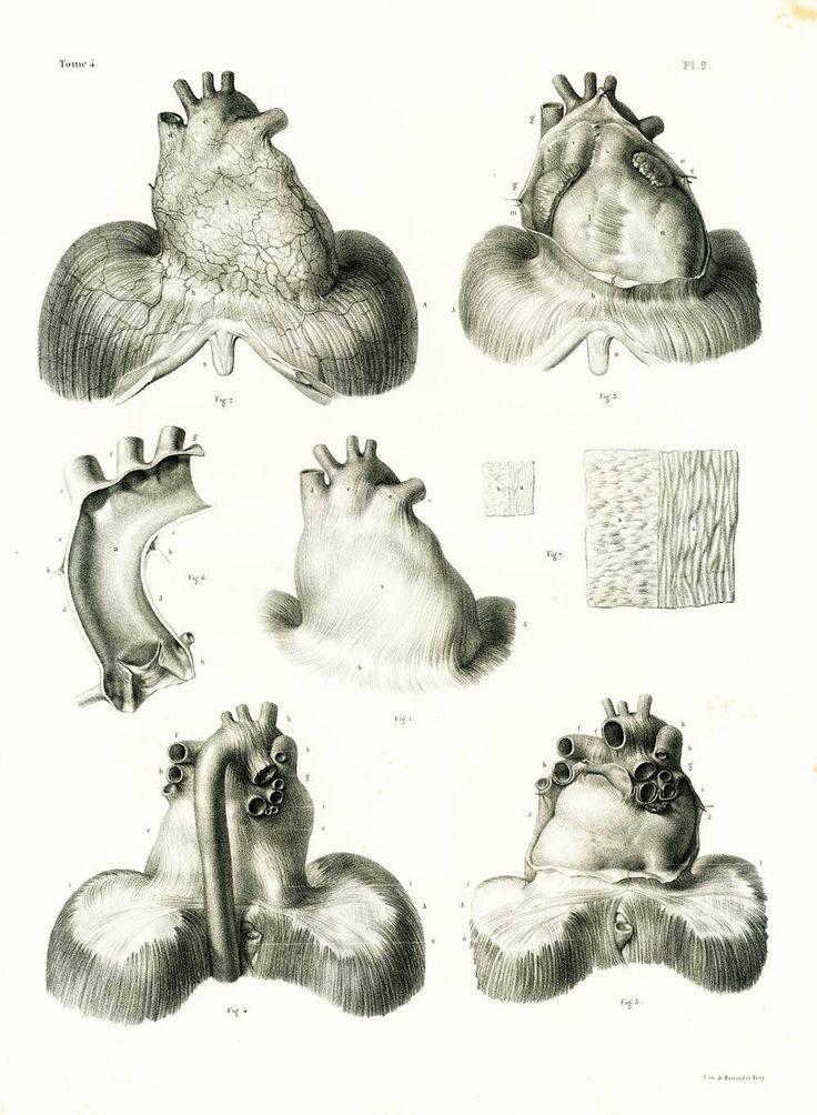 1836 Vintage coronary heart Print, Trachea Aorta Artery Pericardium Anatomy illustration … 7499b93a013756a7b61c181fa24e17d8