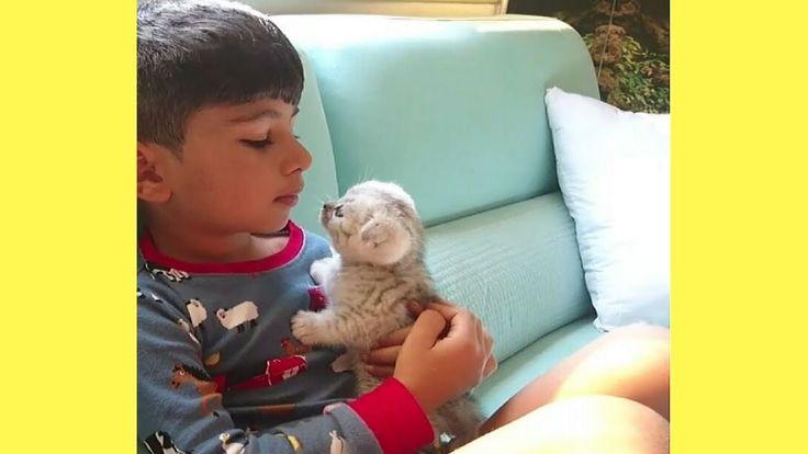 Heart Melting Cute Kitten – Cutest Kitten in the World | Adorable Cat Vi...