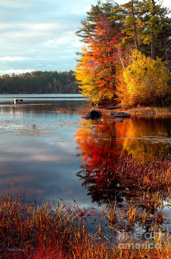 La miscela straordinaria di colore brillante prodotta dalle foglie di aceri, querce, faggi, pioppi giallI... è una delle attrazioni naturali più grande del Nord America. Gli stati del New England da settembre a novembre si colorano come d'incanto e assumono tonalità inconfondibili proprio per il fenomeno del foliage