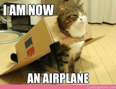 Ready for Takeoff: Spaces Cat, Cardboard Boxes, Halloween Costumes, Funny Cat, Buzz Lightyear, Fat Cat, Baby Animal, Funny Stuff, Silly Cat