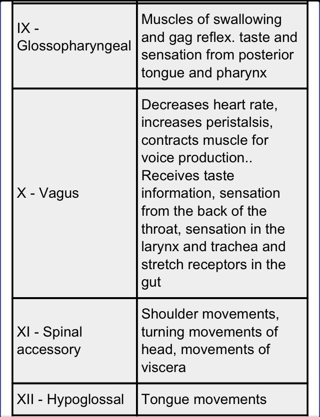 Cranial Nerves #2