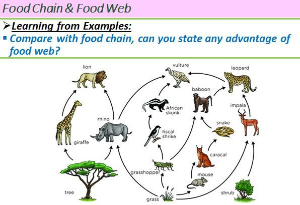Natural food chain Latest