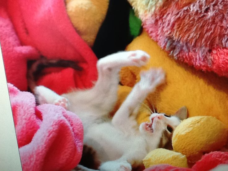 Rolling in the pile of stuffed animals!