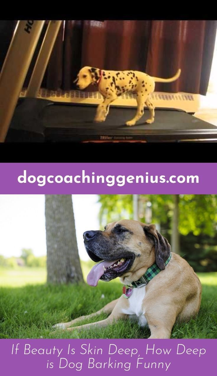 Check Out The Webpage To See More On Dog Growling Dog Growling