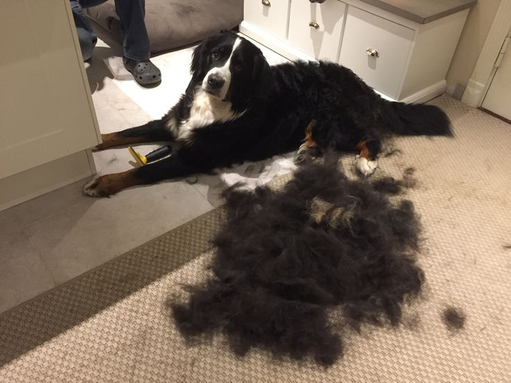 I've been FURMINATED!  Guess what time of the Berner year it is?!
