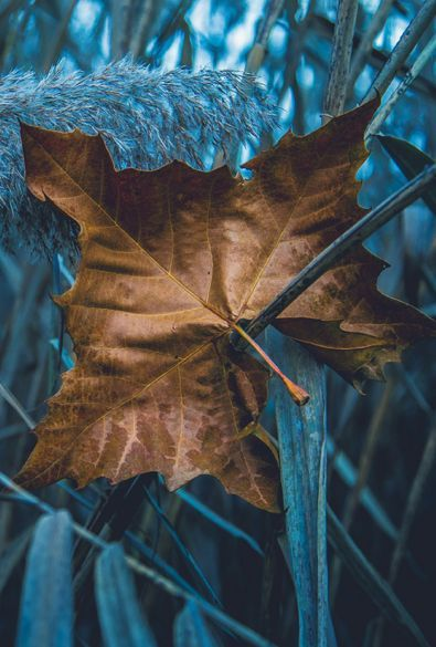 601 Best Blue And Brown Images On Pinterest Botany Brown Eyes