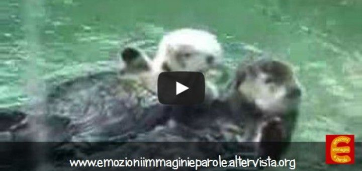 Due lontre che si tengono per mano, tenerissime!