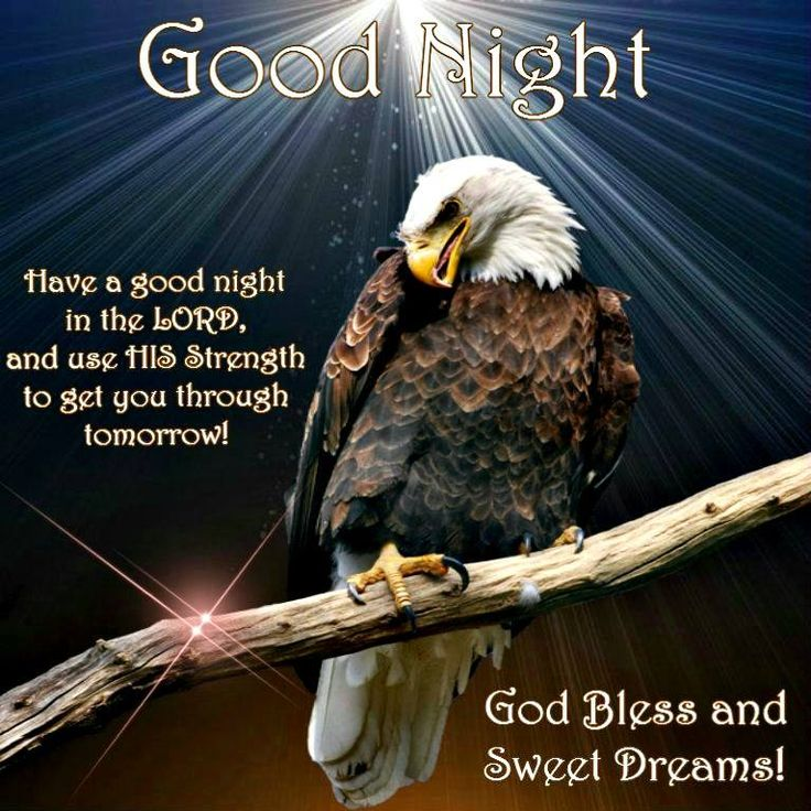 Good Morning America Eagles : Best images about good morning night quotes on