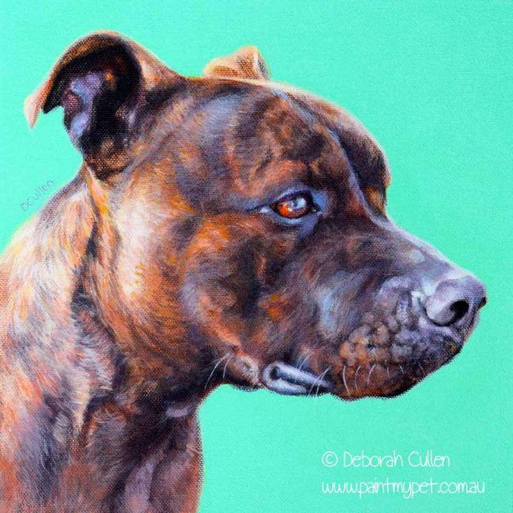Benji Staffordshire Bull Terrier Dog Portrait Pet
