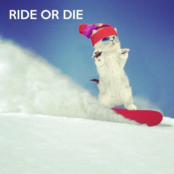 коты сноубордисты фото обои