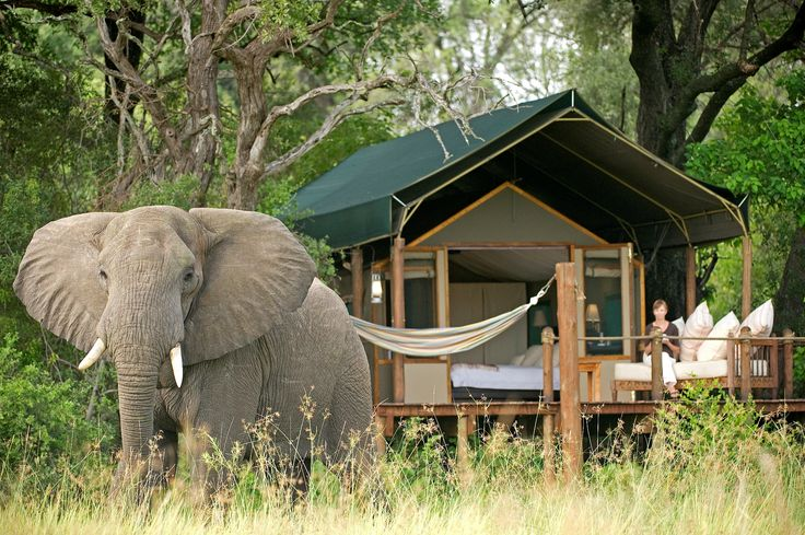 Stanley's Camp in #Botswana is unfenced & guests can expect impromptu appearances of almost any animal! #SecretAfrica