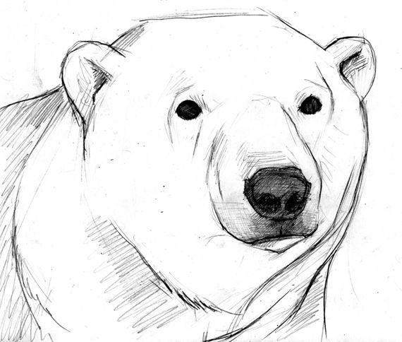 how to draw a polar bear face easy