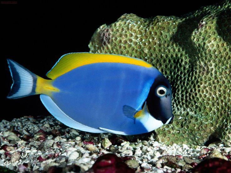 gratis Kleurrijke vissen wallpapers: http://wallpapic.nl/oceaan-en-zee/kleurrijke-vissen/wallpaper-11444