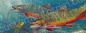 Trout Pair Rear Window Graphic