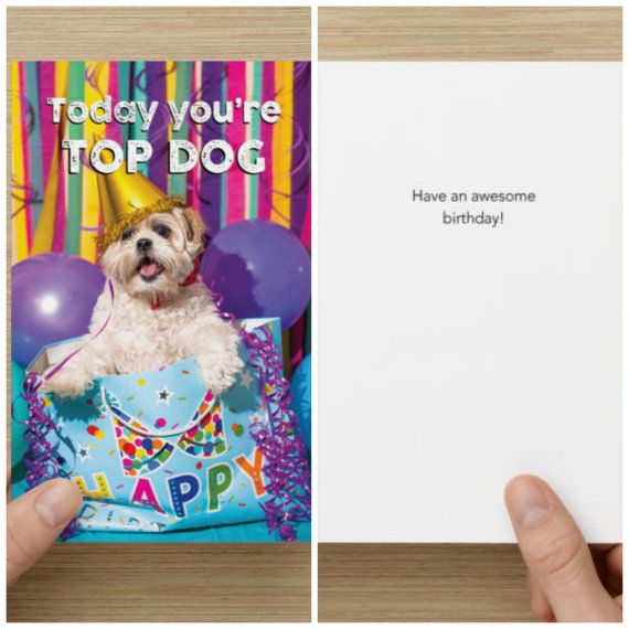 "The Frumpy Dog Birthday Card: ""Today you're top dog Have an awesome birthday!"""