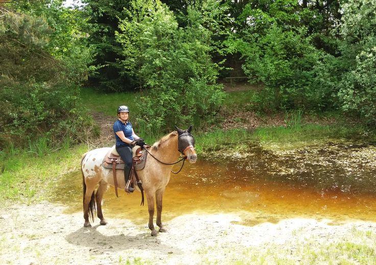 Ben je opzoek naar een buitenrit met eigen paard in een prachtig gebied met een leuke en ontspannen gids. Dan is dit het juiste adres!