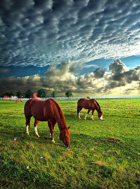 Hailey's Horses | Flickr - Photo Sharing! Phil Koch.