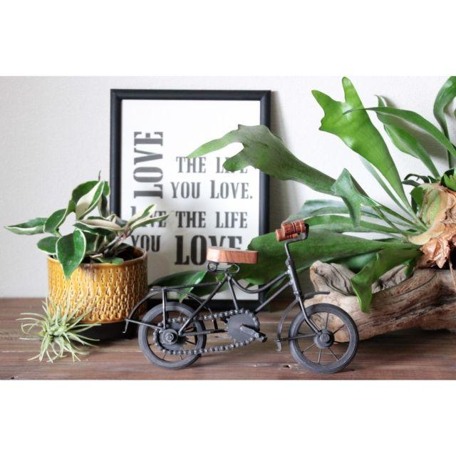 RIKAさんの、My Shelf,タイポグラフィ,ブログしてます,古材,ローボード,バーンウッド,NO GREEN NO LIFE,みどりの雑貨屋,多肉植物,無垢,エアープランツ,コウモリラン,ホヤ,フェイクグリーン,チランジア,レトロ自転車オブジェ,雑貨,植物,観葉植物,のお部屋写真