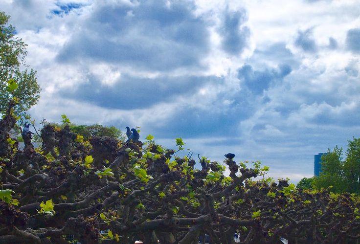 Eiserne Steg 아이제너 스테프 다리 다리에서 보이는 풍경 . . #EiserneSteg #아이제너스테프 #데일리스타그램 #데일리그램 #데일리 #daily #여행스타그램 #여행 #trip #travel #travelphotography #독인 #독일여행 #germany #frankfurt #독일 #프랑크푸르트 #landscape #view http://tipsrazzi.com/ipost/1508334231162792712/?code=BTurf3jBSsI