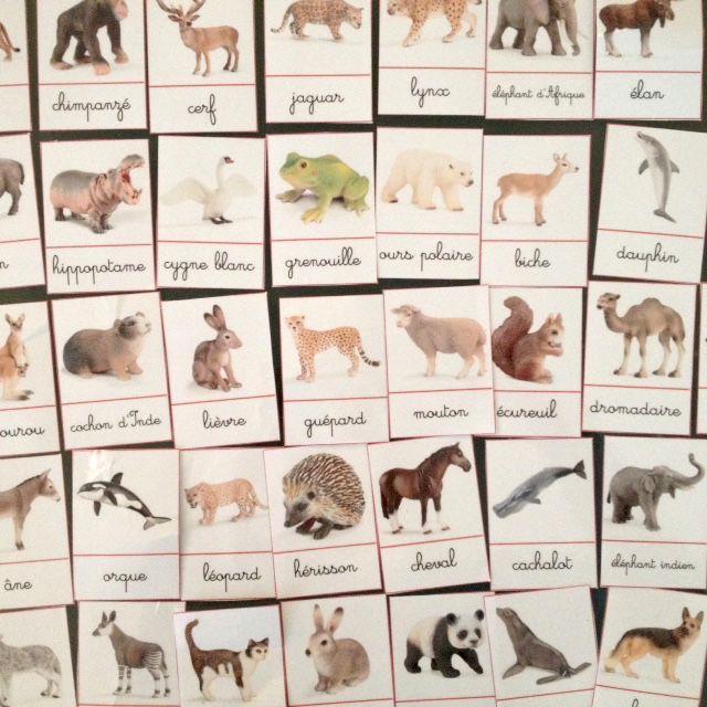 cartes de nomenclature animaux