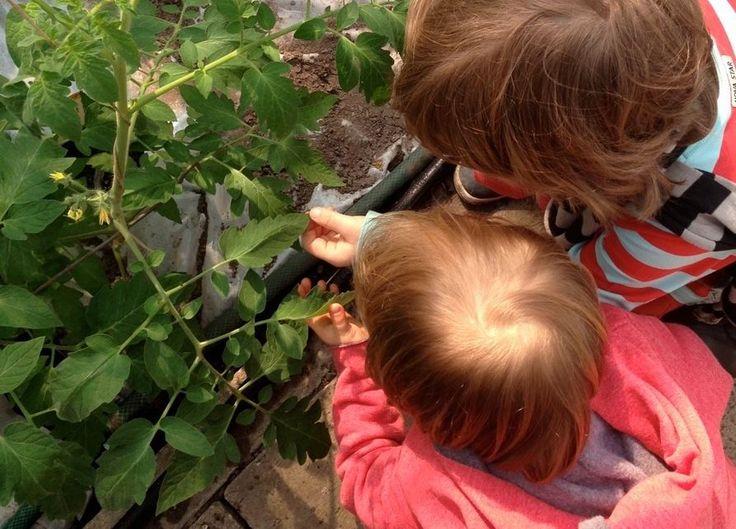 Ciekawa lekcja o roślinach w ekologicznym gospodarstwie, dzieci były zachwycone. Zamiast opryskiwania roślin chemią, hoduje się tam specjalne gatunki owadów, które zwalczają pasożyty. Po powrocie z wycieczki, w szkolnym ogrodzie, zajęcia praktyczne