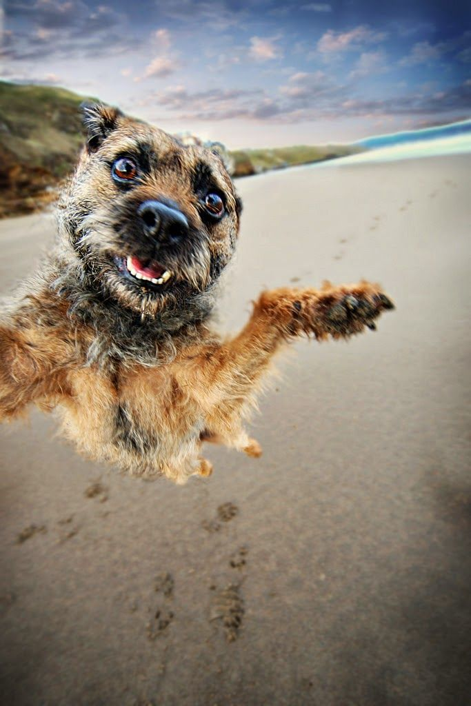 . . . a dog does a selfie !! | most amazing photos. when a dog gets on the beach he goes a little bit mad :)  what a fantastic moment in time....really great shot. LOL! perfect title for a fantastic image in one word AWESOME and what a great shot of a highly charged doggie!