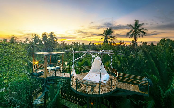 Top 10 des plus beaux hôtels dans les arbres