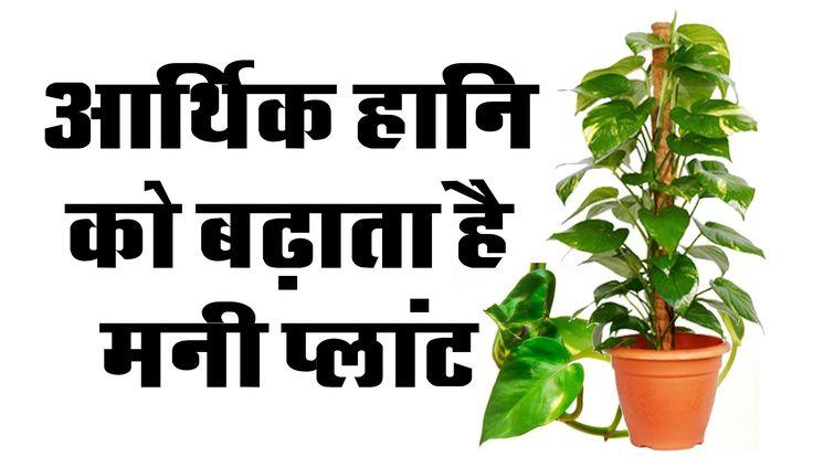 Chamatkari Lal Kitab Ke Totke || Vastu Tips For Money Plant