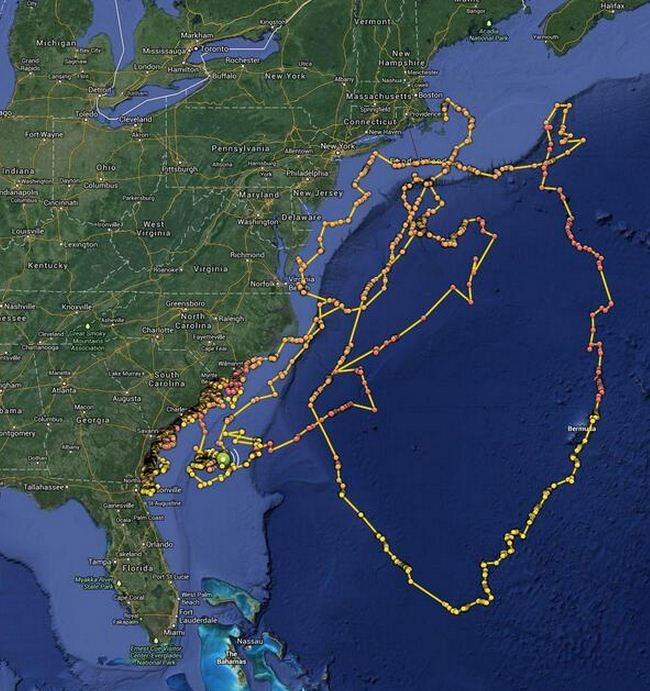 Tracking great white sharks - OCEARCH