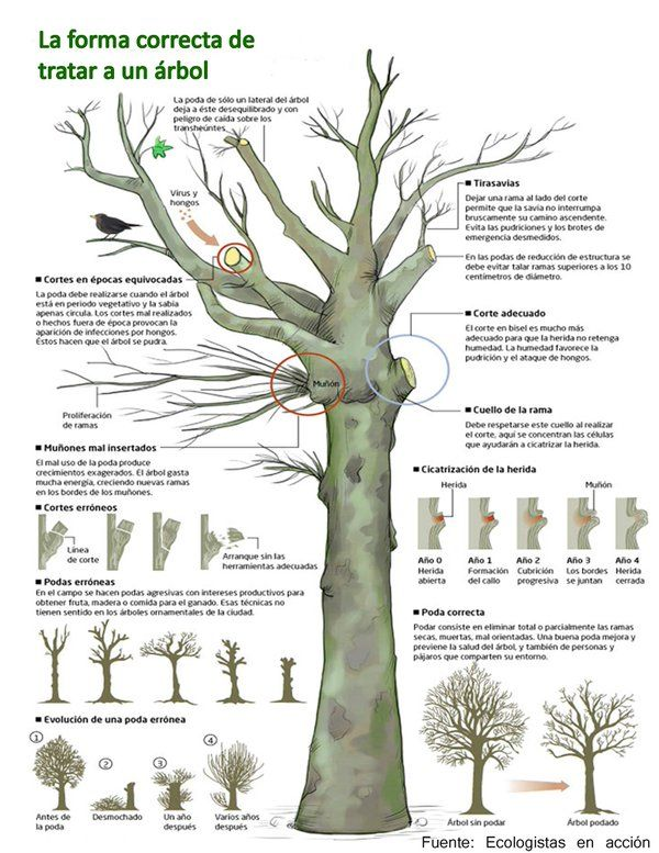 1000 ideas about arboles para jardin on pinterest for Arbol para jardin