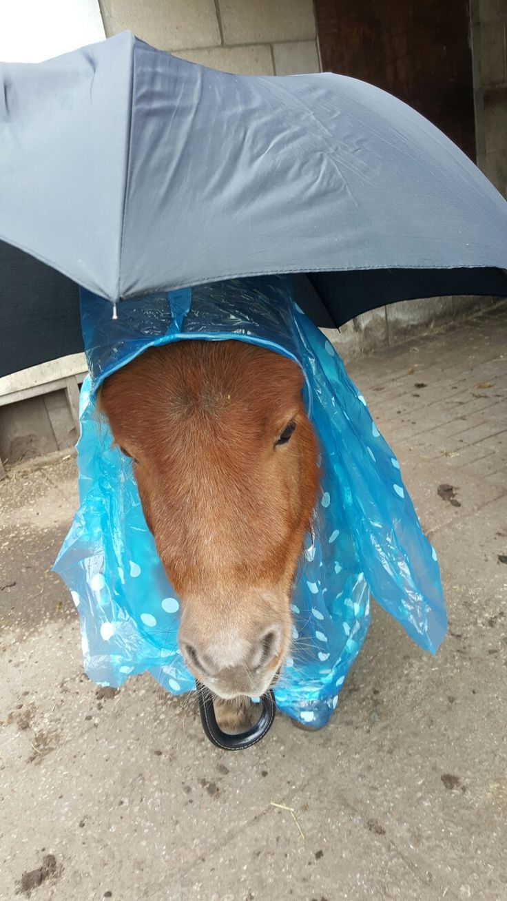 #Milou Mentink   Laat de regen maar komen.