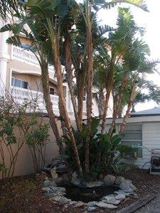 Granger House, Indian Rocks Beach, Florida Vacation Rental, Tampa Bay Gulf Beaches, Beach Front Suites and Cottage #apartment #size #furniture http://apartment.remmont.com/granger-house-indian-rocks-beach-florida-vacation-rental-tampa-bay-gulf-beaches-beach-front-suites-and-cottage-apartment-size-furniture/ #rental house # Tampa Bay Gulf Beaches – Florida Vacation Rental – On the Sands of the Gulf of Mexico – Indian Rocks Beach Florida A Florida Vacation Rental Directly on the Gulf of Mexico…